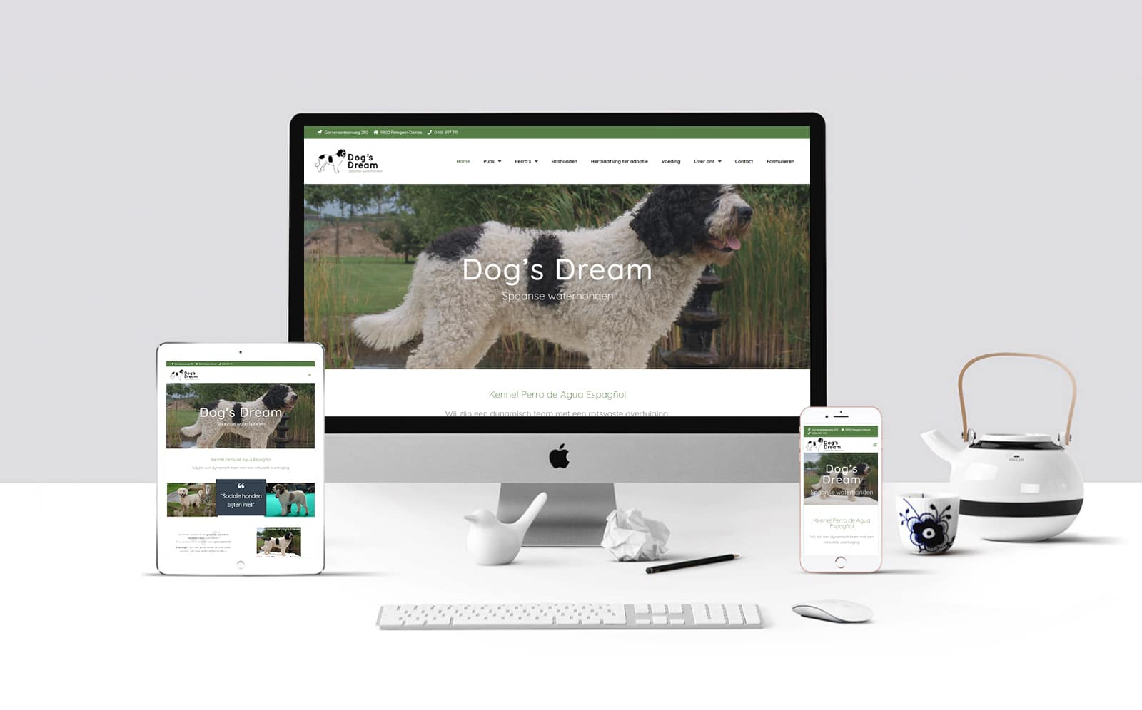 Dog's Dream Spaanse waterhonden – september 2020